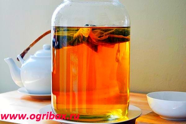 Купить Чайный гриб - комбуча