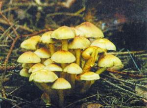lognoopenok