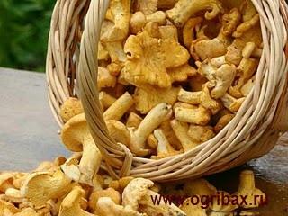 Покупка дикорастущих грибов