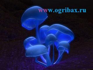 obshhaya-xarakteristika-gribov